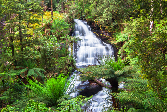 Triplet Falls in the Great Otway National Park